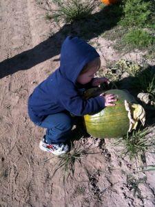 pumpkin - 08